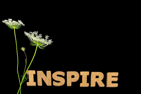 inspire text in cork on black with Queen Annes Lace flower Stock Photo