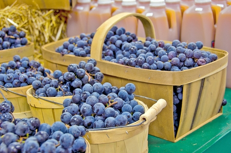Blue Concord grapes in wooden baskets at the market