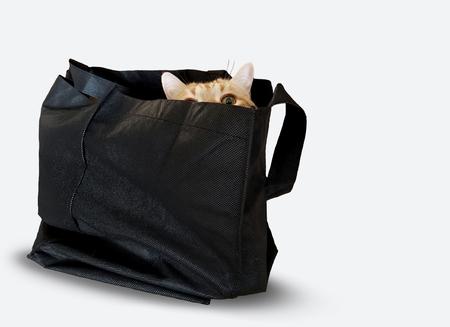 gold tabby cat peeking over edge of black bag isolated on white