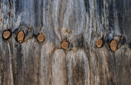 close up of rustic wood grain with row of burls