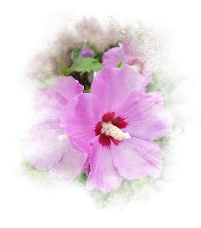 Close up of pink hibiscus in textured white abstract frame