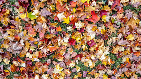colorful autumn leaves on grass