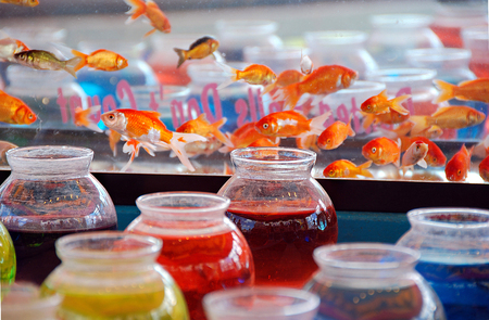 colorful water in glass fishbowls with goldfish prize for carnival game