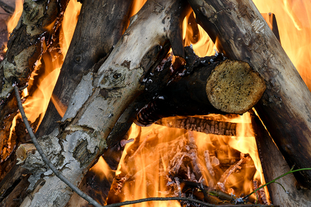 closeup of logs burning in bonfire Stock Photo