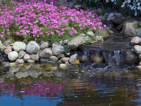pink petunia plants and waterfall in rock garden with water reflection