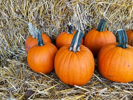 bright orange autumn pumpkins on hay bale Stock Photo