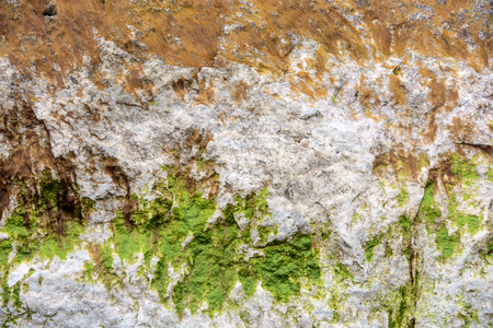 close up of green seaweed on rough rock surface
