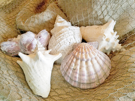 close up of of seashell collection on brown burlap and netting Stock Photo