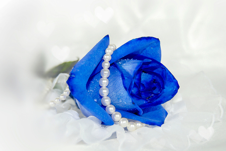 blue rose on tulle with white pearls and bokeh heart lighting Stock Photo