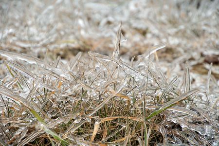 close up of grass covered in thick ice layer Stock Photo