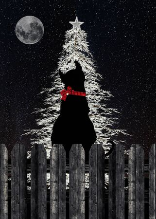 silhouette of cat staring at glowing white Christmas tree on wooden fence with full moon Stock Photo