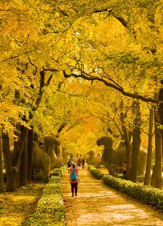 shinto: Shinto in autumn