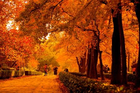 mausoleum: autumnal Street at Ming Xiaoling Mausoleum