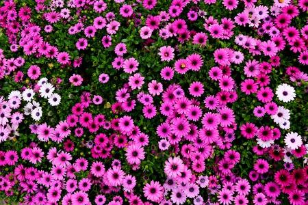 blooming: blooming flowers Stock Photo