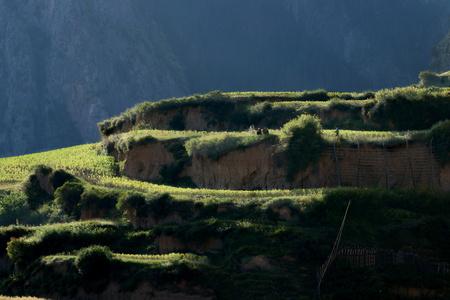 green terrace at Gannan Zhabei 版權商用圖片