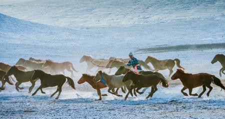 Horses running on a prairie Editorial