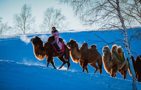 Winter camel rider