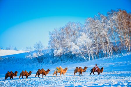 Ice and snow Camel rider Banco de Imagens