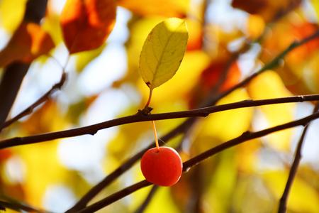 나무에 열매 스톡 콘텐츠