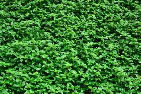 fresh plant Stock Photo - 12677873