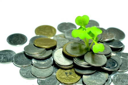 plant of money Stock Photo