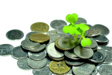 plant of money Stock Photo - 12677894