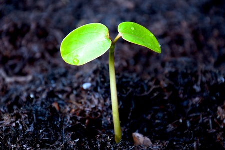 plant on new world Stock Photo