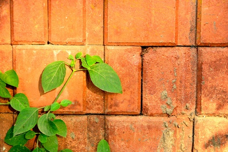 wall and leaves Stock Photo