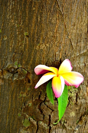 flower on the tree photo