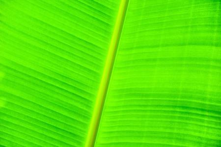 banana leaves photo