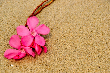 pink flower on sand texture Stock Photo