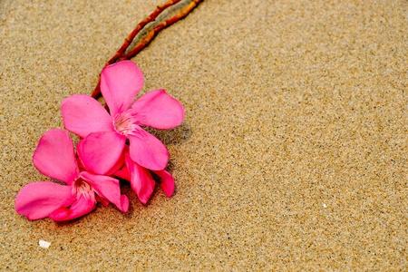modulate: pink flower on sand texture Stock Photo