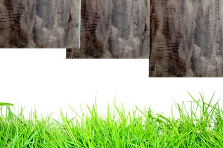 grass wood and white background photo