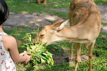 Brow-antlered deer Stock Photo - 19453859