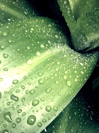 Raining time Stock Photo