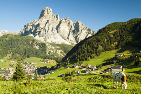 cow in foreground with the village of Corvara and the mountain valley Stock Photo