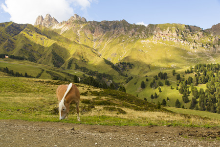Close up of a horse grazing on a sunny day and mountain range on the background