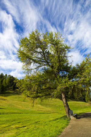 sud tirol: panoramic view of the Seiser Alm in a sunny day with blue sky and clouds with tree in foreground Stock Photo