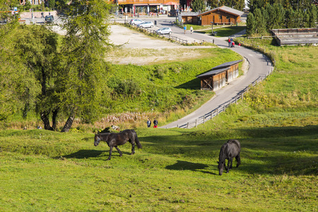 sud tirol: View of two horses grazing in the country of Compatsch