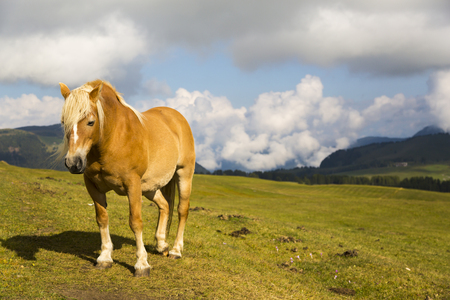 Close up of a horse grazing on a sunny day