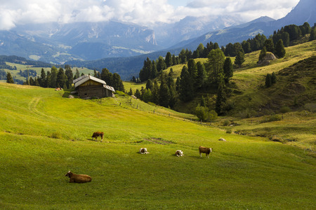 Panoramic view of a green valley with shelter and grazing cows Stock Photo