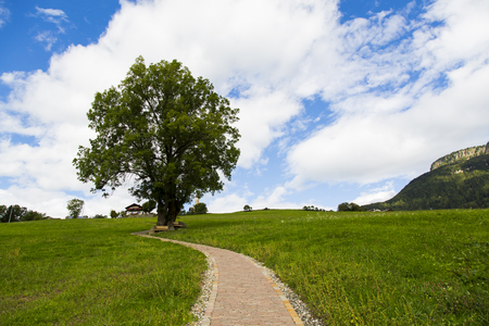 View of a tree with a path in Seiser Alm with green fields, blue sky and clouds