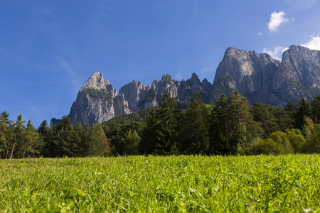 Close up view of a green meadow with forest and mountains of Seiser Alm in the background