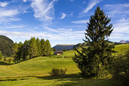 panoramic view of the Seiser Alm in a sunny day with blue sky and clouds with tree in foreground Stock Photo