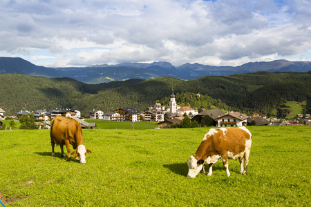 Panoramic view of the village of Kastelruth with two cows in the foreground Stock Photo