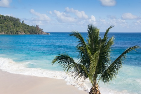 Single coconut palm tree on a beautiful deserted, white-sanded  beach, horizontal view Stock Photo - 9828200