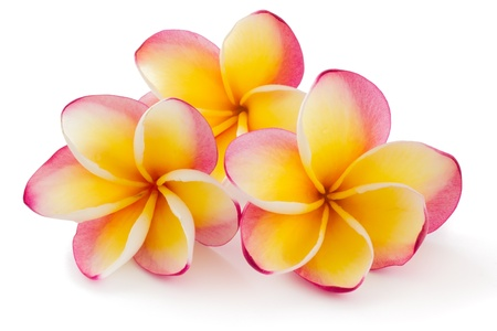 Frangipani, Plumiera rubra, isolated on white background