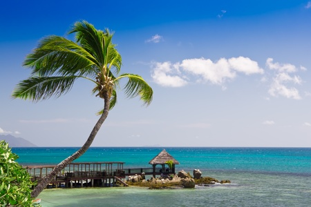 Tropical seascape panorama with coconut palm tree and long wooden decking Stock Photo - 10317982