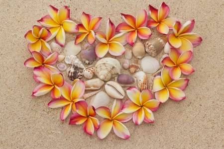 Group of frangipani, plumeria flowers in shape of heart with saw shells, on sand  photo