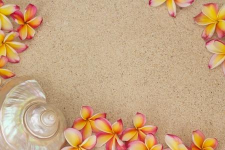 フランジパニ、砂の上の大規模な海シェルとプルメリアの花のグループ